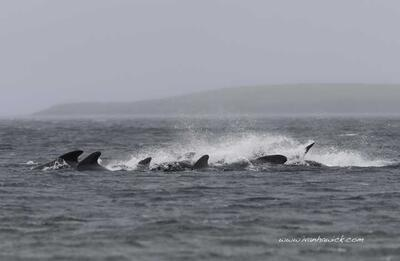 Whales saved from mass stranding